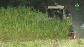 Why aren't we building more with hemp? – Part 2
