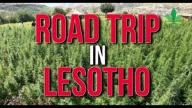 Road Trip In Lesotho: Africa's First Country to Legalise Cannabis Cultivation