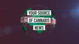 Cannabis News Network: Your Source of Cannabis News