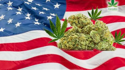 America-Cannabis-News-Network-720p-compressor