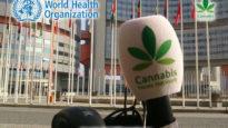 WHO cannabis news network