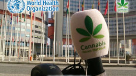 WHO cannabis news network