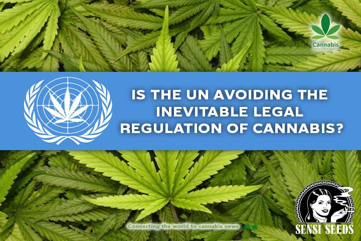 Is the UN avoiding the inevitable legal regulation of cannabis?