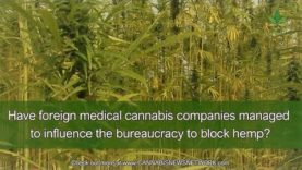 Corruption frustrates hemp producers in Portugal